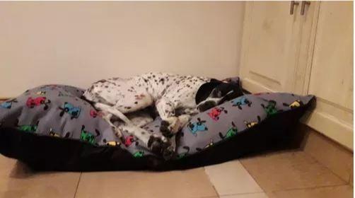 almohadones para perros grandes